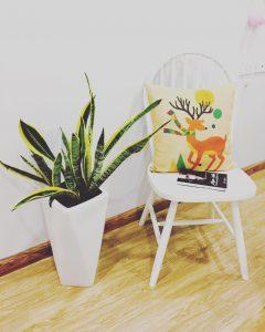 Cây trồng phong thủy trong nhà, Các Loại Cây Trồng Phong Thủy Trong Nhà Giúp Mang Tài Lộc