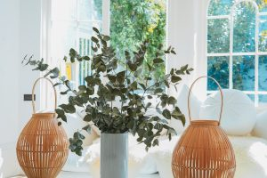 trang trí nhà cửa bằng cây xanh, 20 Ý Tưởng Trang Trí Nhà Cửa Bằng Cây Xanh Đơn Giản